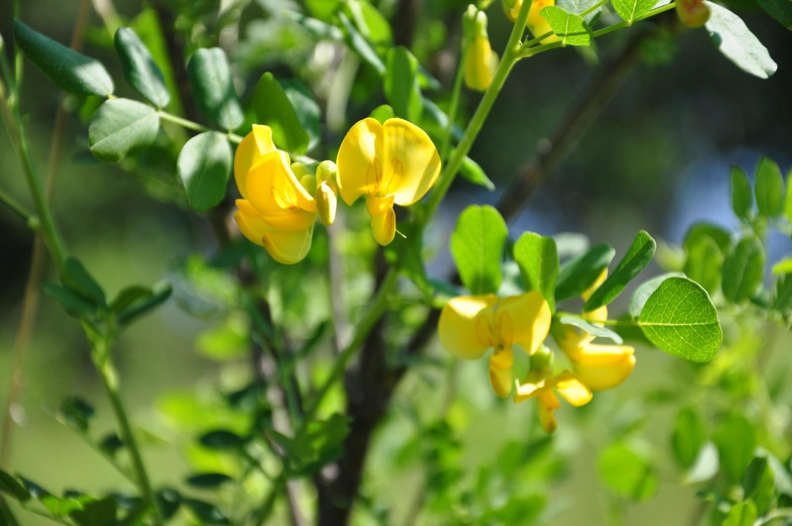 virág12