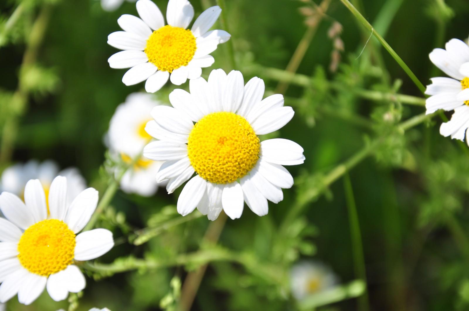 virág13