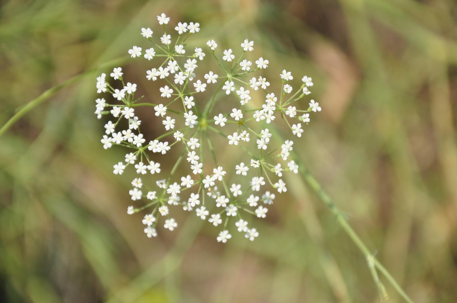 virág24