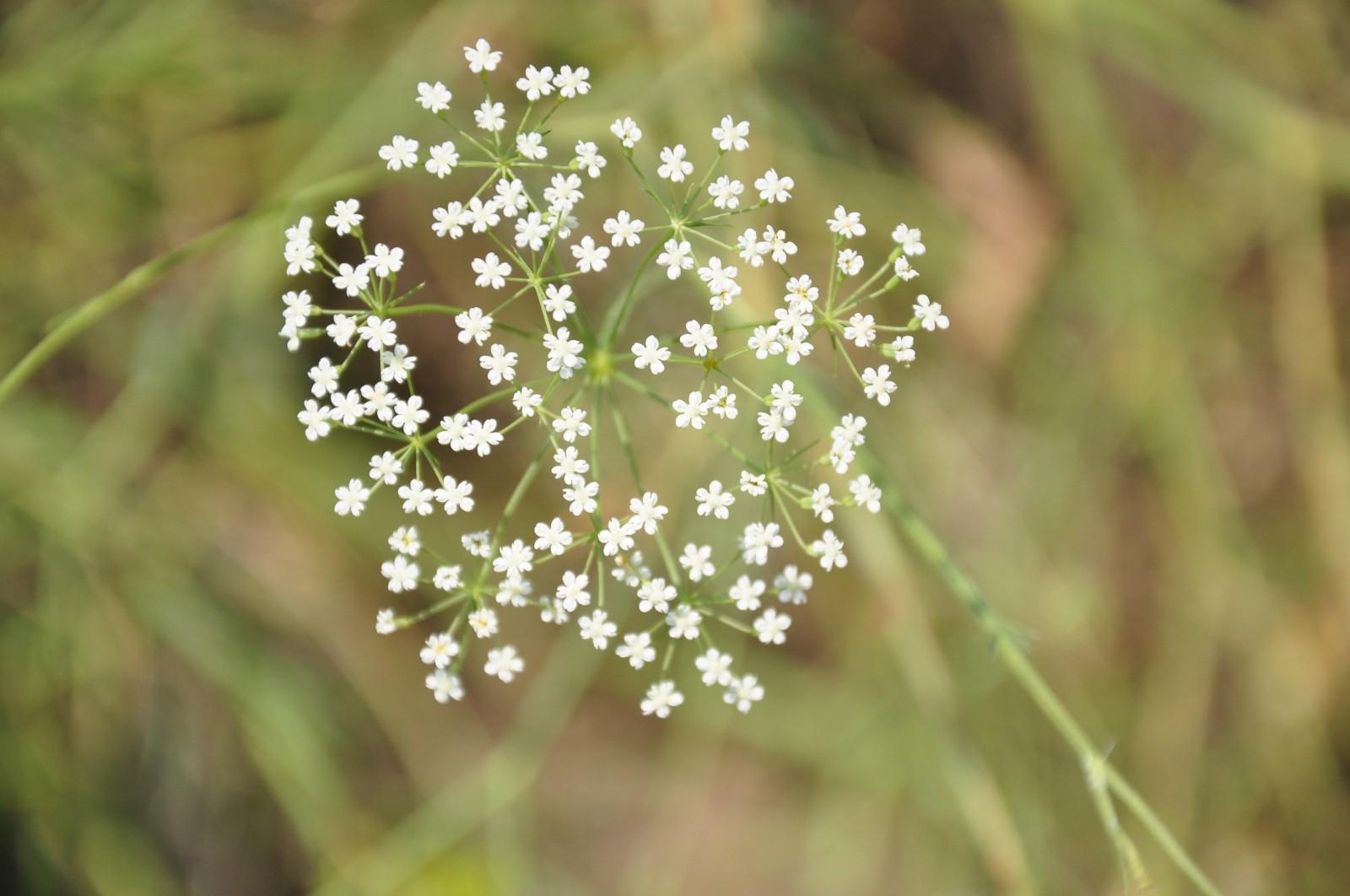 virág241