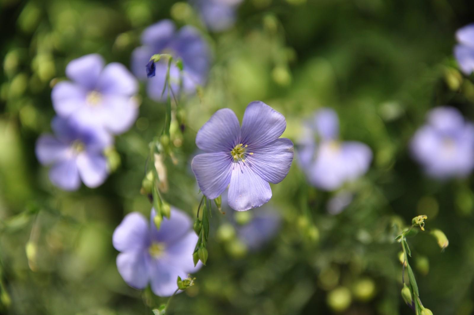 virág29