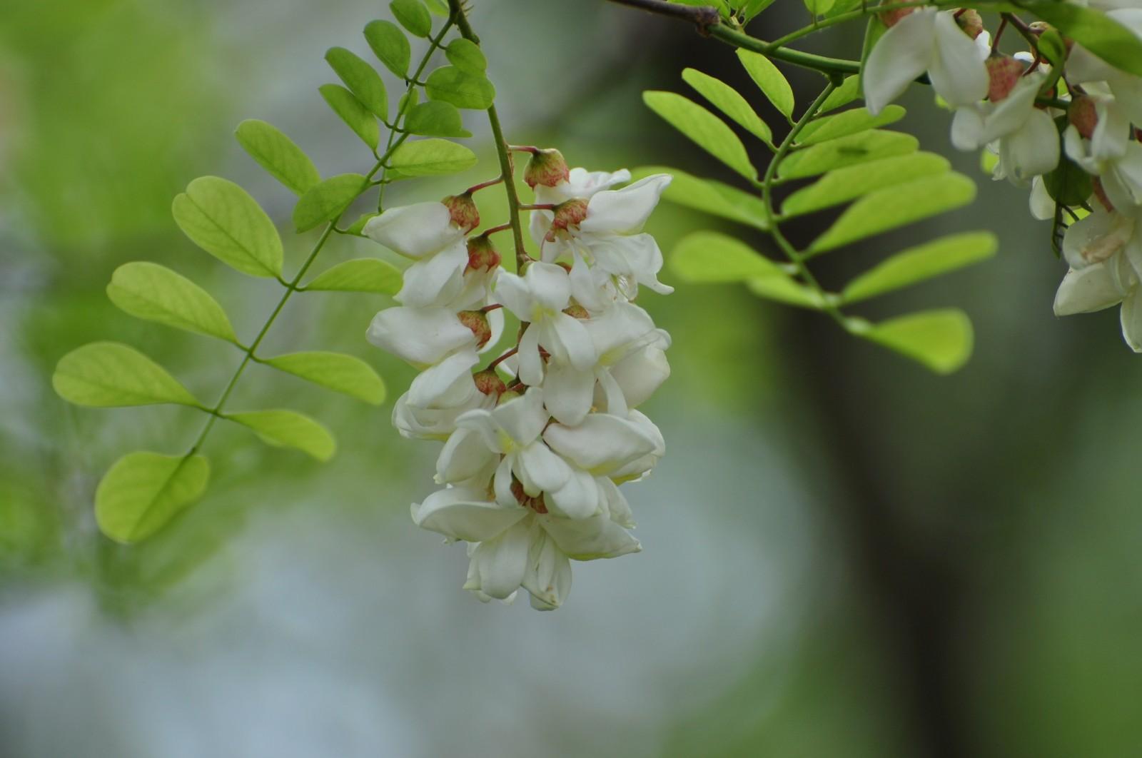 virág31