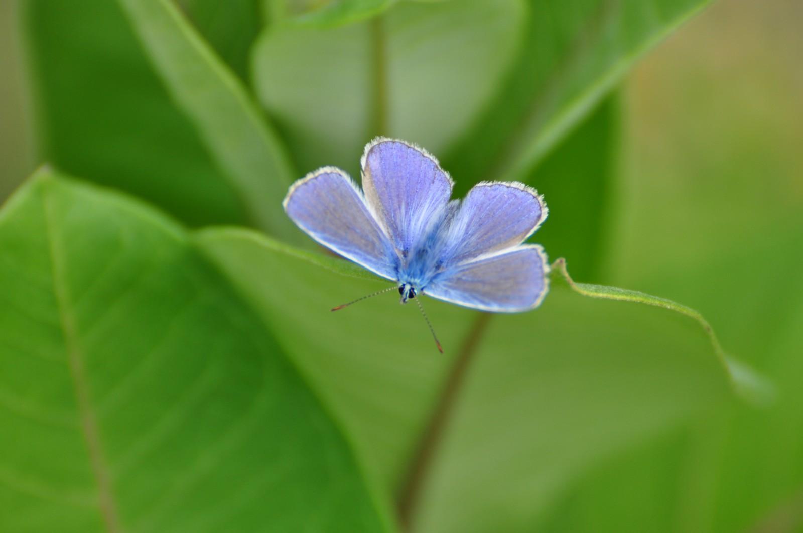virág33