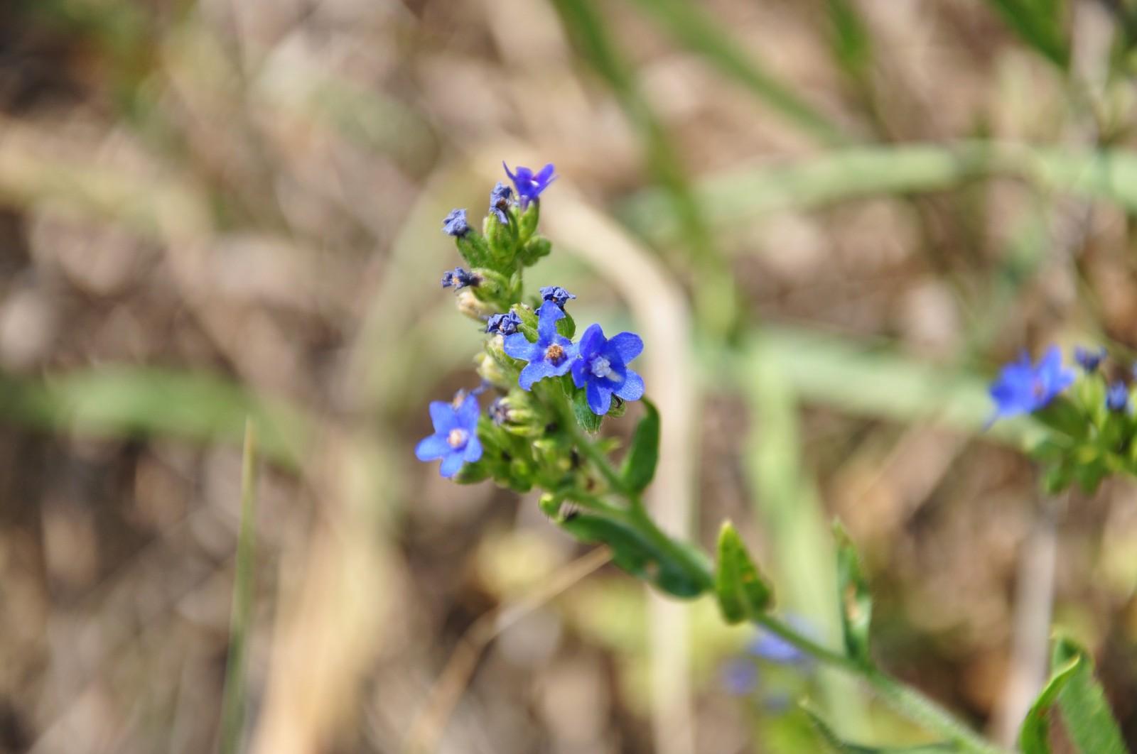 virág42