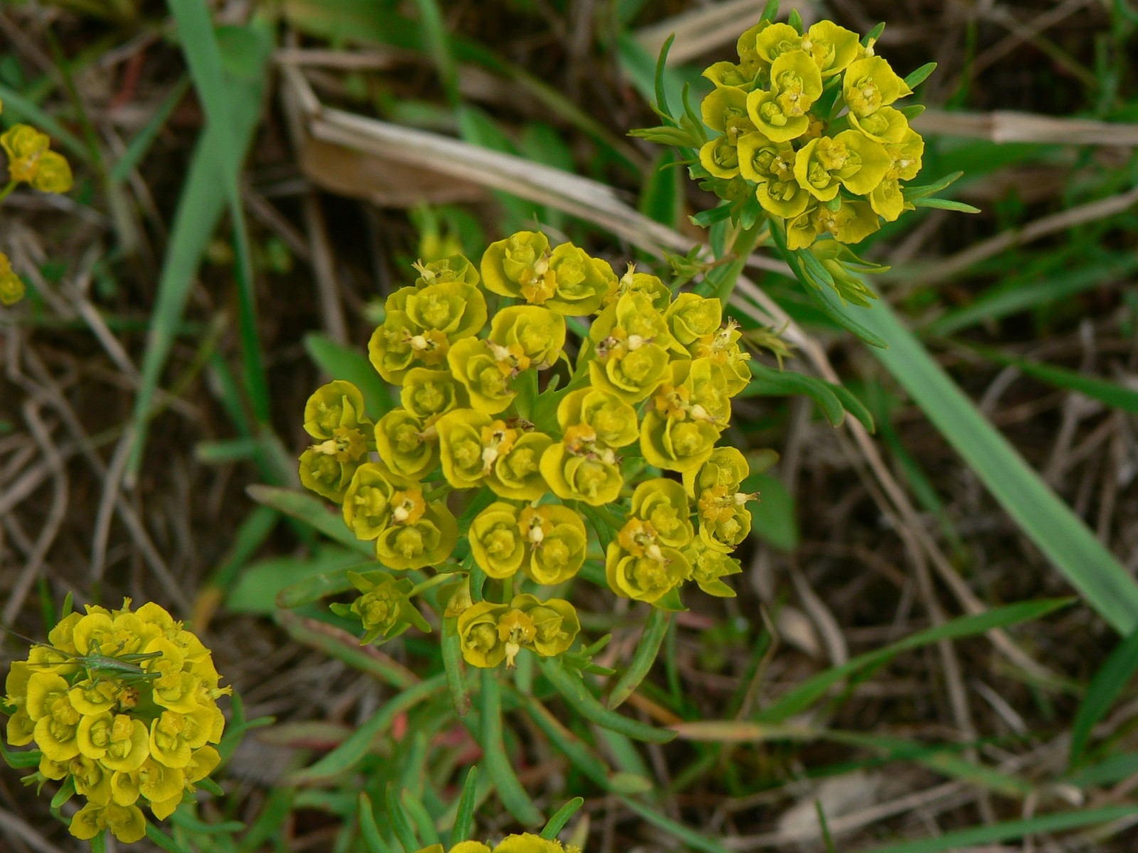 virágok11