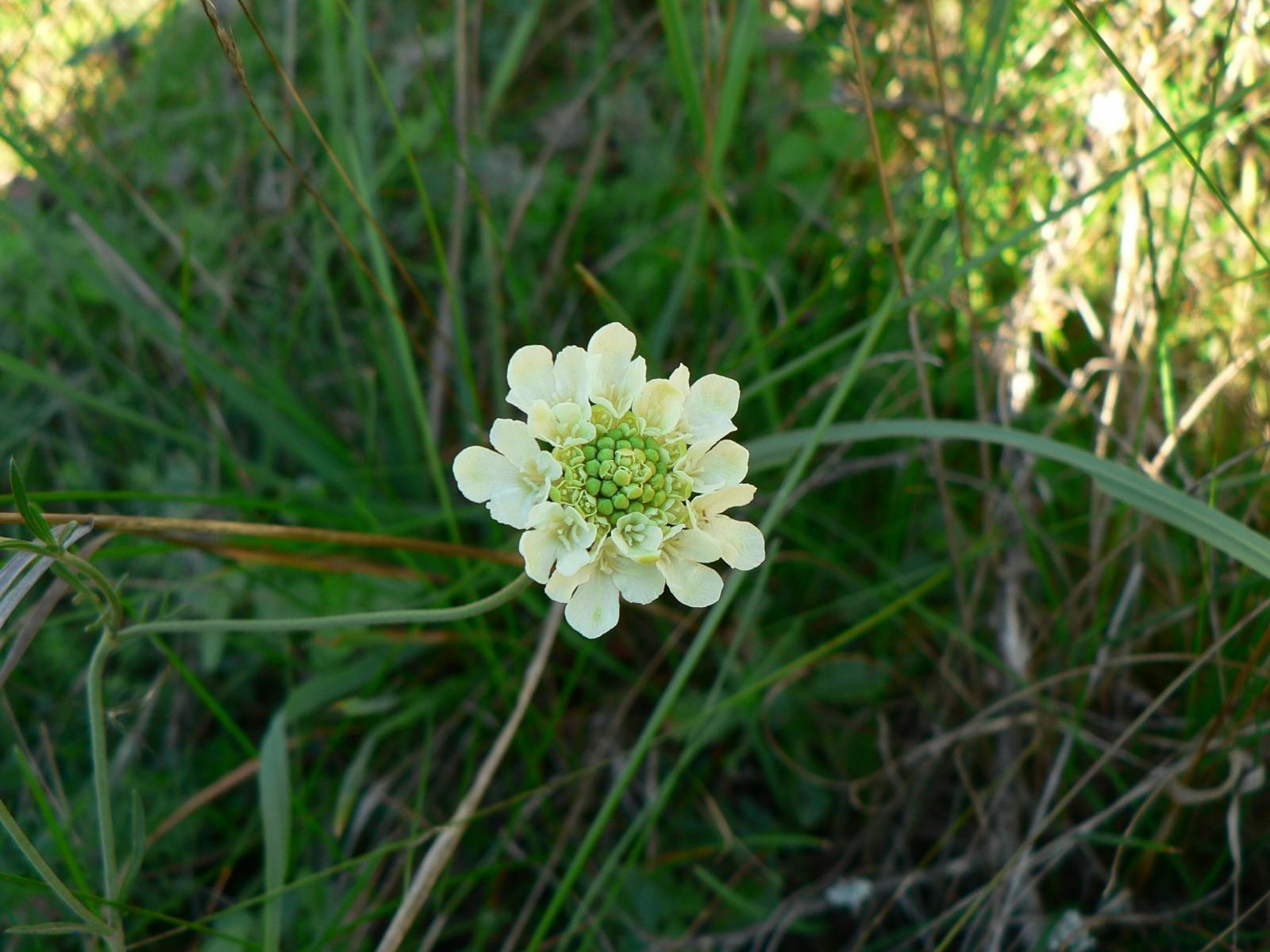virágok5
