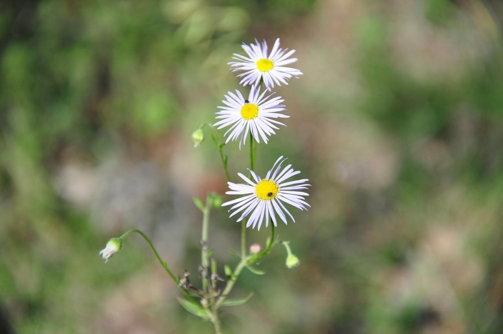 virágok8